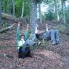 Waldtag mit Förster (9)